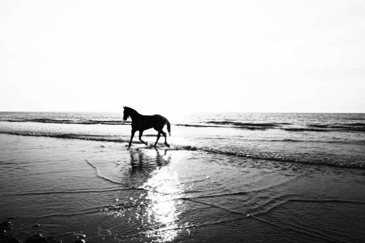 horse on seashore